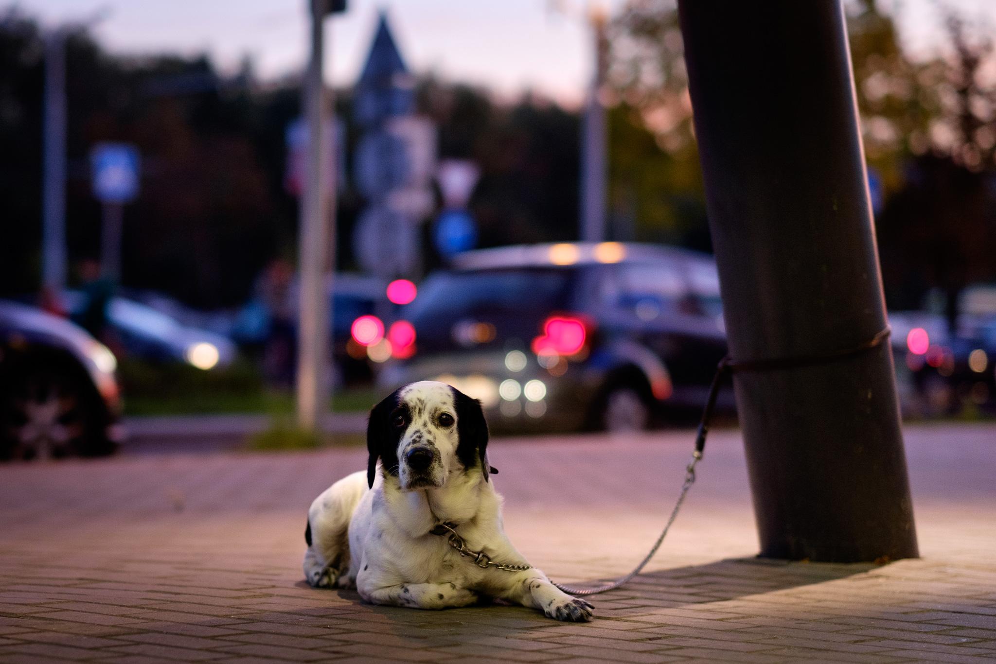 Shopping mall dog portrait
